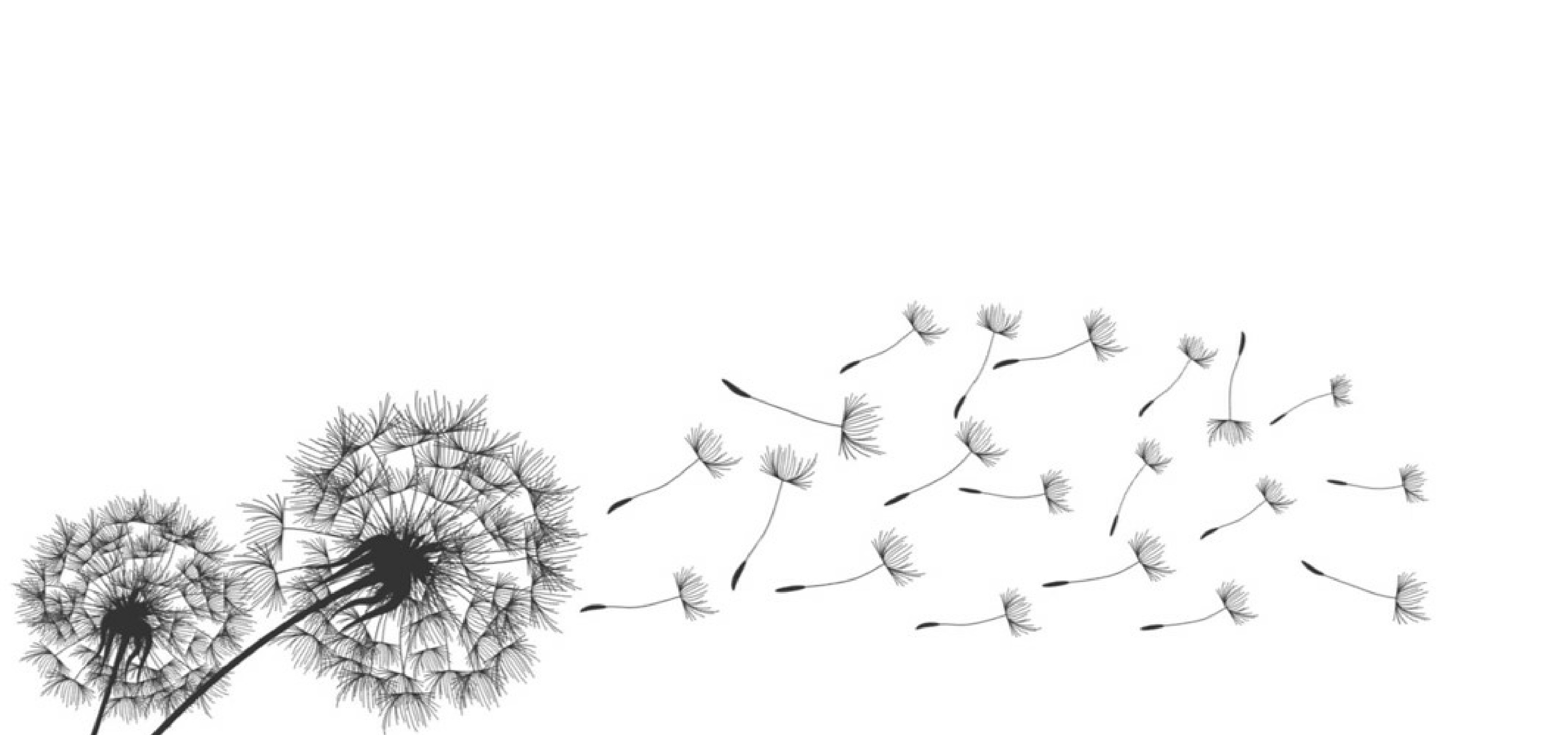 revised-dandelion2